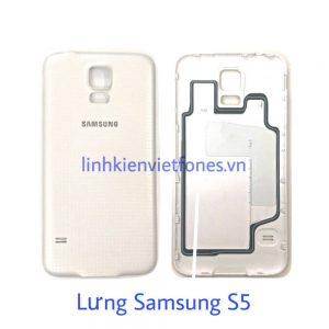 lung s5
